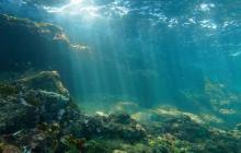 Глубины Балтийского моря скрывали лес, которому больше 10 тыс. лет: ученые не могут объяснить феномен