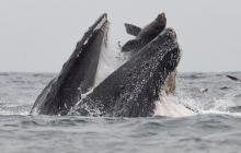 С глубин Черного моря вырвался кит-потрошитель с Нибиру