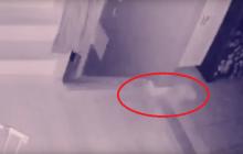 Призрак ребенка попал на камеру наблюдения – владелец дома бьет тревогу в Сети: видео