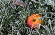 На Украину надвигаются заморозки, холод обойдет только 2 региона - Гидрометцентр