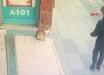 "В Стамбуле кошка нападает на мужчин возле супермаркета: видео с пушистым ""охранником"" стало хитом Интернета"