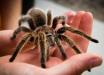 Под Днепром ветеран Афганистана лишился ног после того, как был укушен пауком