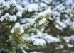 Погода в Украине до конца 2020 года: самые теплые и холодные дни декабря