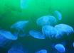 Азовское море под угрозой: медузы атаковали известный украинский курорт - кадры