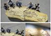 У берегов Перу нашли останки доисторического хищника мегалодона, жившего на Земле 2,5 миллиона лет назад