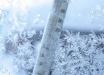 В начале февраля станет теплее, а потом ударят сильные морозы: прогноз погоды в Украине от народного синоптика