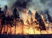 Bloomberg: Лесные пожары в Сибири приняли угрожающие масштабы: уже сгорела территория Австрии