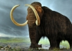 Ученые хотят клонировать мамонта, чтобы возродить популяцию давно вымерших животных, - подробности