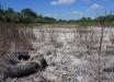 Крым накрывает еще одна экологическая катастрофа - детали