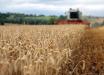 Рекордные показатели: на начало года общая доля экспорта аграрной продукции в Украине составила 46%