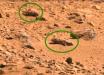 На снимках с Марса рассмотрели отряд хищных насекомых