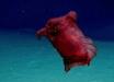 """Ученые потрясены странным """"монстром"""" в водах Антарктики: """"безголовый цыпленок"""" бороздит морские глубины - видео"""