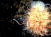 """Похожее на лапшу существо обнаружили в океане: """"чудище"""" с пучком света вызвало бурные дебаты – видео"""