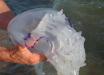 """Нашествие медуз в Азовском море: отдыхающие нашли """"полезное"""" применение морскому созданию"""