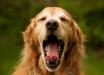 Ученые выяснили, почему в жару хочется зевать, - интересные факты