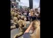 Протесты в США: вслед за полицией перед протестующими встали на колени бойцы американской Нацгвардии - кадры