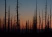 """""""Мертвая зона"""", - после взрыва ракеты под Северодвинском природа в округе начала вымирать на глазах - видео"""