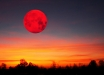 """""""Кровавая"""" Луна зажглась в ночном небе - украинцам повезло увидеть чудо вживую: захватывающие кадры редкого затмения"""