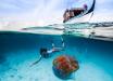 В океане засняли медузу убийцу размером с человека - ученые ужасно напуганы: кадры