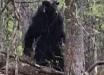 Жители Ингушетии пережили нападение гигантского минотавра-людоеда