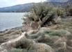 Берега Греции покрылись паутиной: кадры нашествия поразительных существ потрясли Интернет