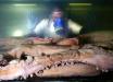 Ученые обнаружили уникального хищника в Мексиканском заливе - подробности, видео