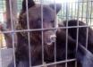 Медведь схватил девушку и потащил в клетку на базе отдыха на Прикарпатье - подробности трагедии и фото