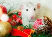 Эфа Форина гороскоп на 2020 год Белой Крысы: как выстоять и оказаться победителем