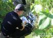 На Черниговщине отец ножом убил 8-летнего сына и заявил о его пропаже