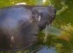 Нельзя смотреть без слез: в Сети показали печальные кадры гибели животных от рук оккупантов в Крыму