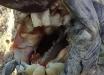 В Аргентине посреди поля обнаружили таинственное существо с зубами человека: монстр может быть опасным - кадры