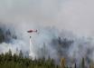 Виновницу лесного пожара в Чернобыле поймали: странный способ отомстить бывшим работодателям