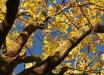 Когда закончится бабье лето и в Украине похолодает: прогноз