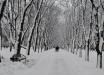 Когда готовиться к морозам до -18, и какие области Украины ждет потепление: озвучен точный прогноз погоды