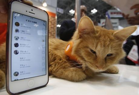 кот, гаджет, домашние питоцы, япония