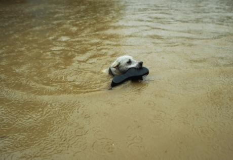 чили, наводнение, чп