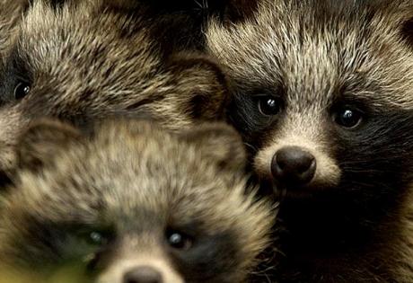 природа, чернобыль, фауна, зона отчуждения