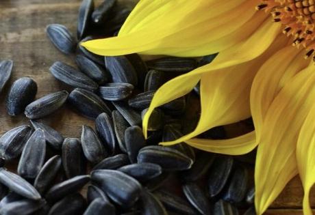 веганская кухня, паштет, семена подсолнечник, жир, пророщенный