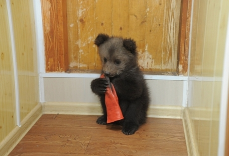 россия, пермь, медвежонок, подарок