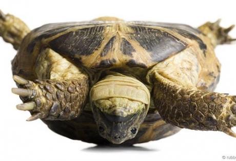 черепаха, рептилия, животное, переворот, панцирь