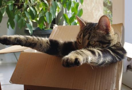 кот, коробка, биолог, тайна