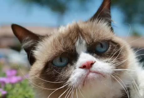 сердитый кот, звезда, интернет, мультимиллионеры