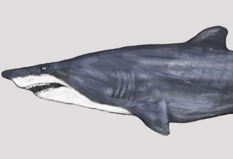 акула, скелет, окаменелость, сша, нашли, общество, новости, наука, техника