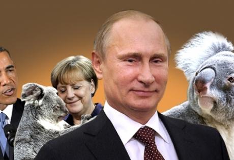 Путин родила коала вот такие новости у первого канала