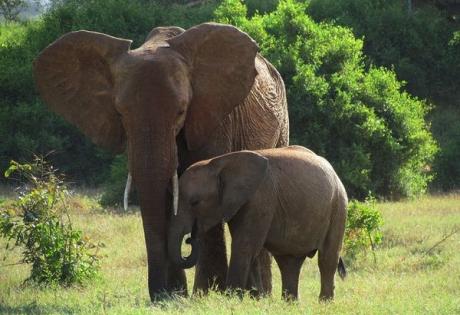 слониха, детеныш, колодец, спасение
