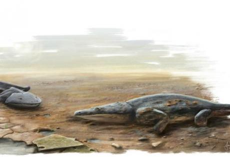 ученые, новый вид, древние земноводные
