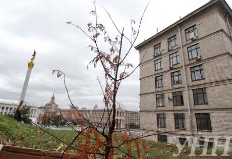 Киев, Майдан, Мир, засохло, дерево